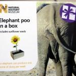 Слоновье говно в коробочке