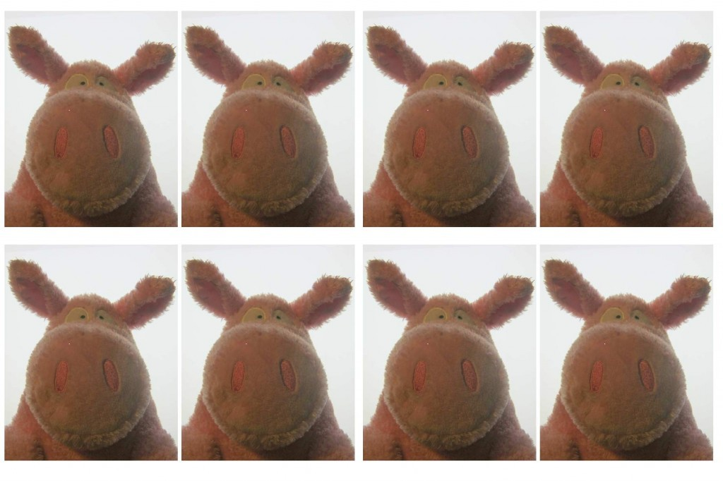Boynton pig passport photos
